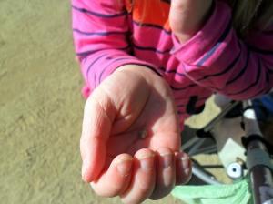 Princess found a teeny tiny rock