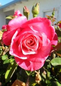 As a flower unfolds