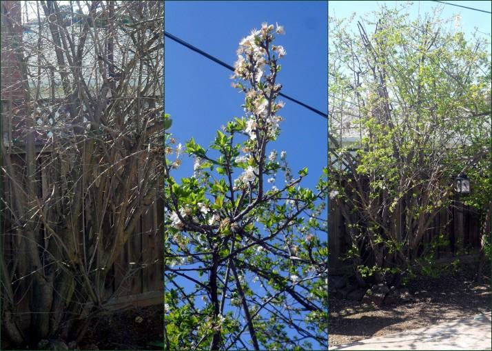 Tree Transformation