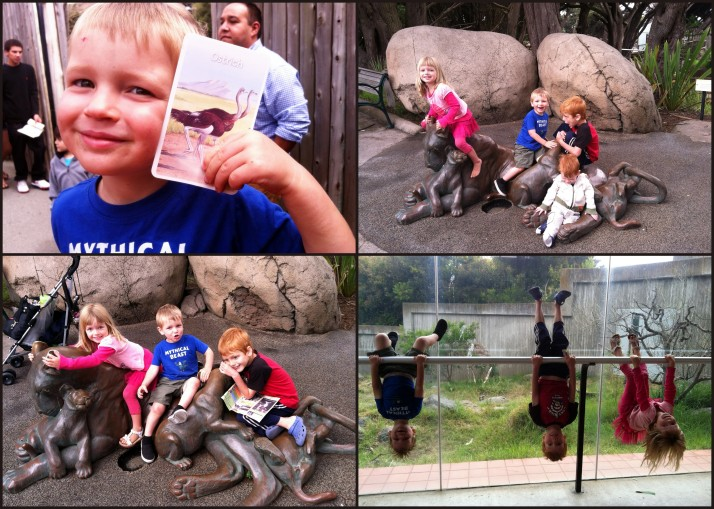 African Animal Scavenger Hunt at the Zoo