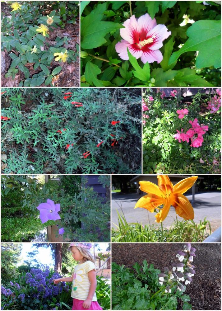Colorful Flower Treasure Hunt
