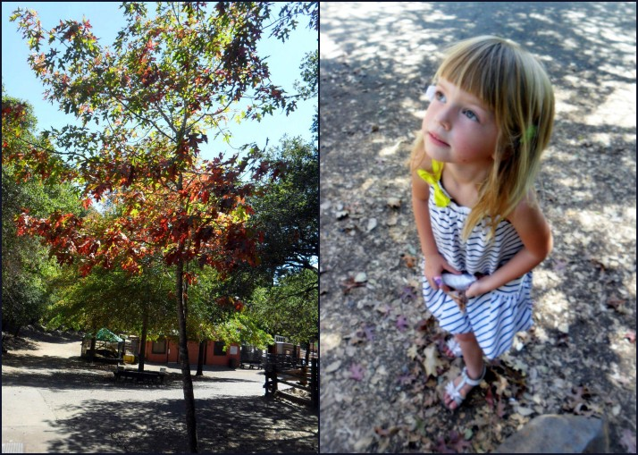 Contemplating the tree and looking for yellow (her favorite color) leaves