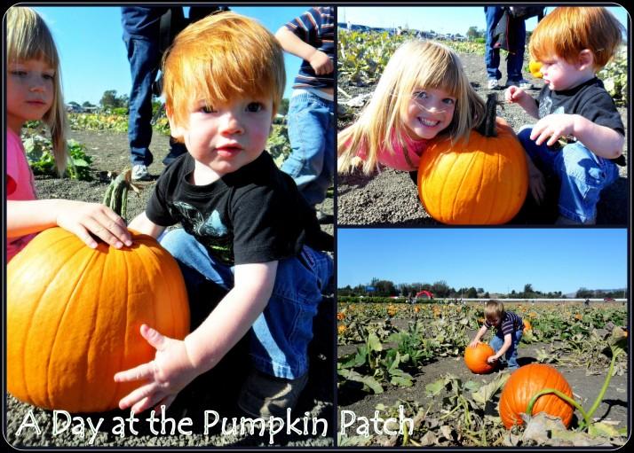 6 Pumpkins