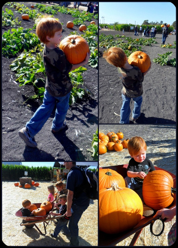 Carrying the pumpkins