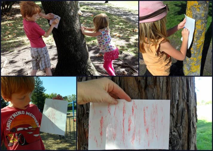 Tree bark rubbings