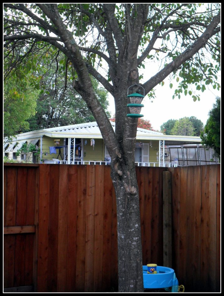 A distressingly full bird feeder