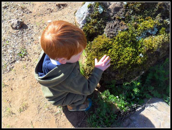 Even the littlest gets in on the nature study when he feels the moss on the rock