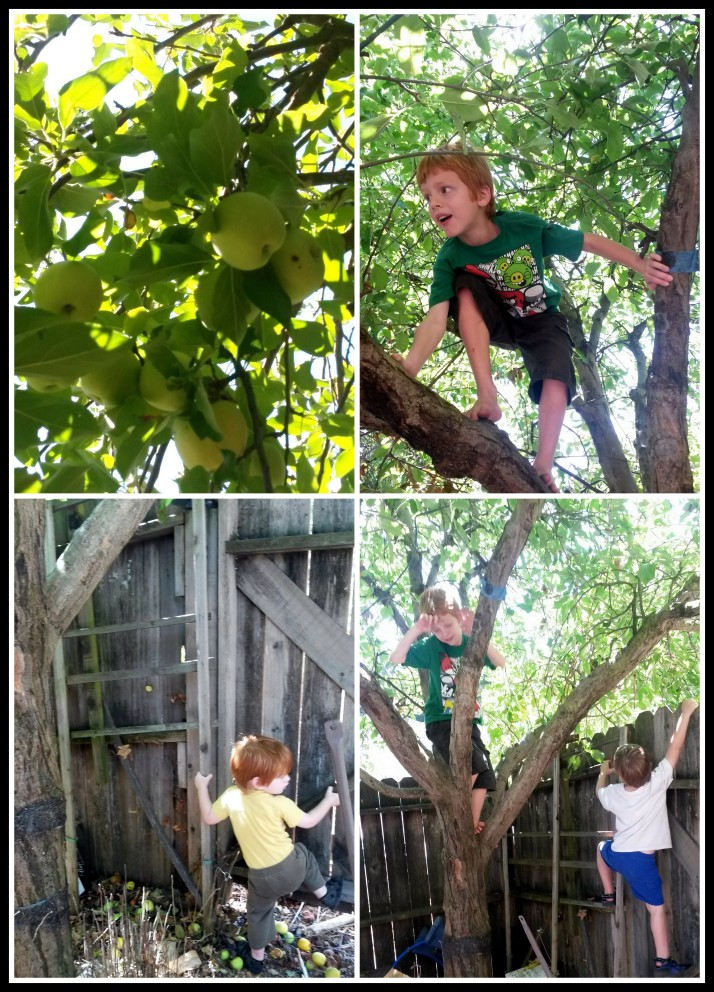 Climbing the tree to grab some apples and leaves to study.