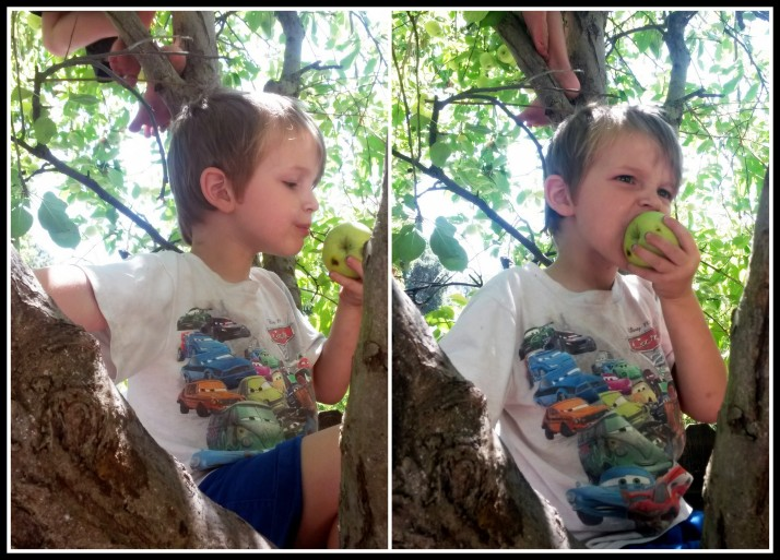 Z-urchin loves to grab apples out of the tree, take two bites, then throw them on the ground.  Maybe he plans to plant an orchard.