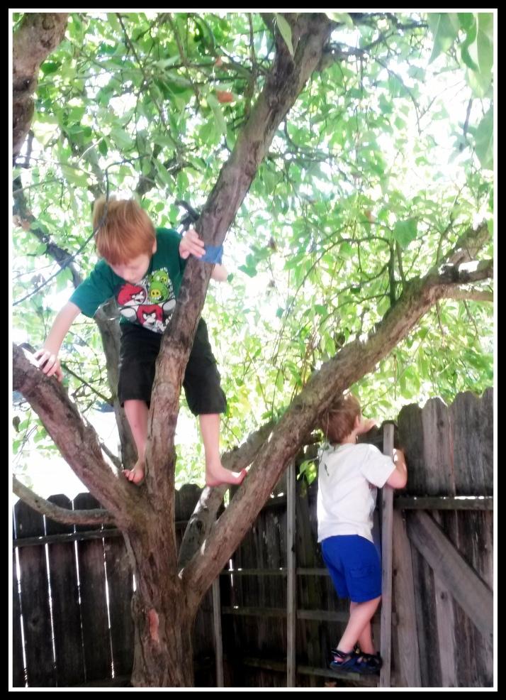 Climbing the Apple Tree