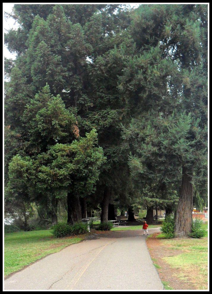 OHC Nature Walk