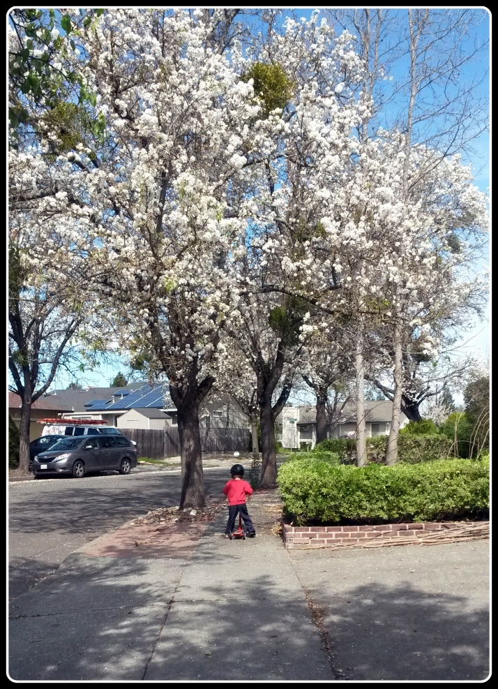 OHC Spring 1